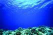 海底大观0013,海底大观,动物,