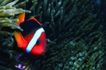 海底大观0015,海底大观,动物,