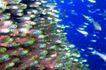 海底大观0020,海底大观,动物,