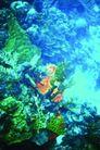 海底大观0025,海底大观,动物,