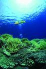 海底大观0029,海底大观,动物,