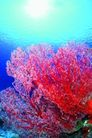 海底大观0030,海底大观,动物,