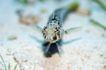 深海动物0083,深海动物,动物,