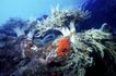 深海动物0094,深海动物,动物,