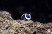 深海动物0104,深海动物,动物,