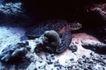 深海动物0107,深海动物,动物,