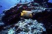 深海动物0109,深海动物,动物,