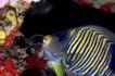 深海动物0112,深海动物,动物,