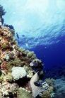 深海动物0115,深海动物,动物,