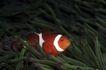 深海动物0117,深海动物,动物,