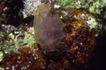 深海动物0118,深海动物,动物,