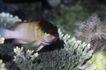 深海动物0120,深海动物,动物,