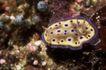 深海动物0124,深海动物,动物,