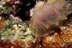 深海动物0125,深海动物,动物,
