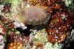 深海动物0126,深海动物,动物,