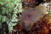 深海动物0128,深海动物,动物,