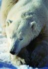 狂猛之兽0052,狂猛之兽,动物,