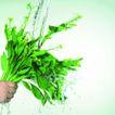 动感蔬菜0029,动感蔬菜,生活,
