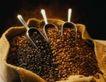 咖啡可可0023,咖啡可可,生活,