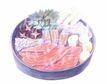 美食插图0082,美食插图,生活,