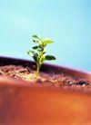 花园生活0039,花园生活,生活,