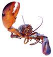 食材海鲜0040,食材海鲜,生活,