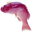 食材海鲜0041,食材海鲜,生活,
