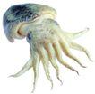 食材海鲜0042,食材海鲜,生活,
