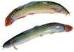 食材海鲜0076,食材海鲜,生活,