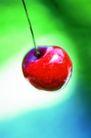 鲜味食物0066,鲜味食物,生活,