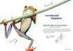 青蛙0002,青蛙,创意设计,