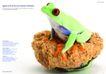 青蛙0006,青蛙,创意设计,