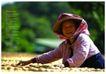 传统人文0009,传统人文,艺术欣赏,