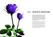 艺术之花0001,艺术之花,花卉,