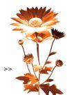 艺术之花0004,艺术之花,花卉,