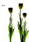 艺术之花0005,艺术之花,花卉,
