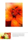 花卉0008,花卉,花卉,