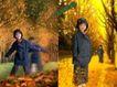 鲜花宝贝0056,鲜花宝贝,影楼摄影设计,秋天树林 黄树叶 林荫道