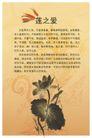 古典底纹0057,古典底纹,喷绘设计,莲之爱 顾敦颐作品 水墨莲花