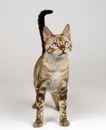 宠物猫0021,宠物猫,动物,