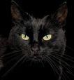 宠物猫0035,宠物猫,动物,