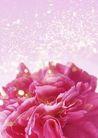 花卉0219,花卉,底纹,