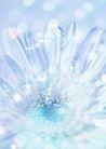 花卉0221,花卉,底纹,