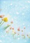 花卉0225,花卉,底纹,