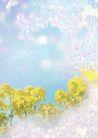 花卉0226,花卉,底纹,