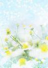 花卉0227,花卉,底纹,