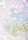 花卉0228,花卉,底纹,
