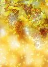 花卉0250,花卉,底纹,