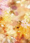 花卉0251,花卉,底纹,