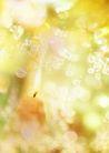 花卉0256,花卉,底纹,